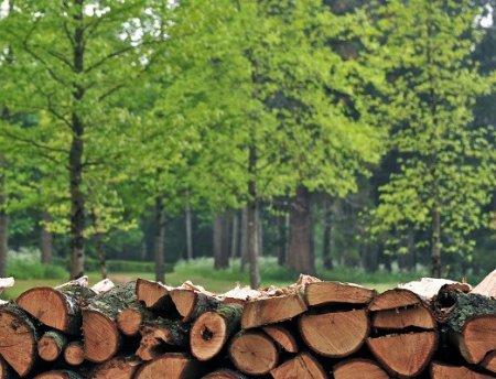 За деревьями леса не видно