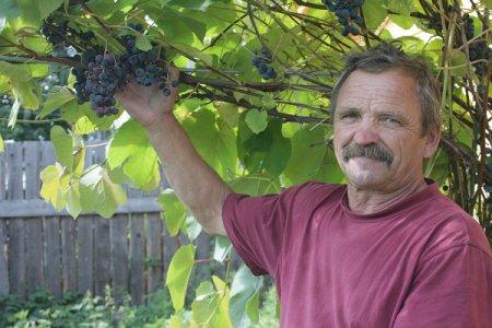 Виноград - всему голова