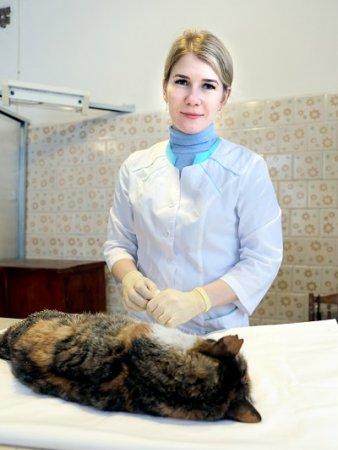 Руки  ветеринаров, или О бедной кошке замолвите слово