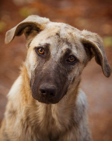 У них есть душа. Справедливо ли сажать собак на цепь?