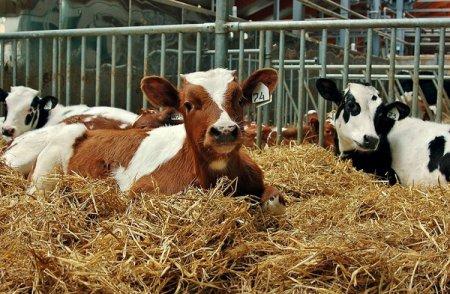 Около 200 новых фермерских хозяйств создано в Нижегородской области в 2020 году