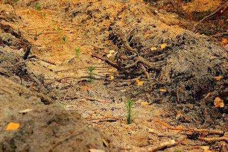 В Нижегородской области высадят 18 миллионов деревьев по нацпроекту «Экология» в 2021 году
