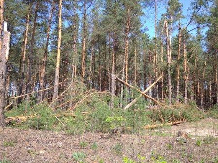 Квадрокоптеры обследуют нижегородские леса для выявления последствий урагана