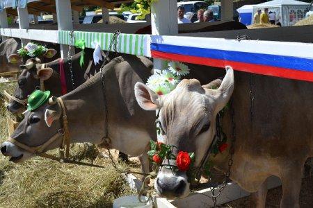 Крупнейшая аграрная выставка «День поля-2021» пройдет в Нижегородской области 14-15 июля