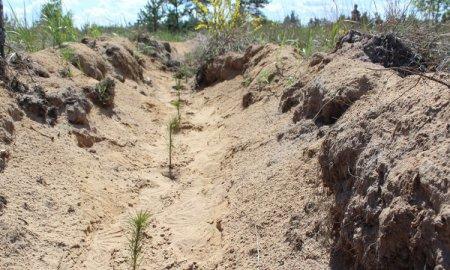 Нижегородская область вошла в топ-10 субъектов страны, где увеличилась площадь лесного фонда